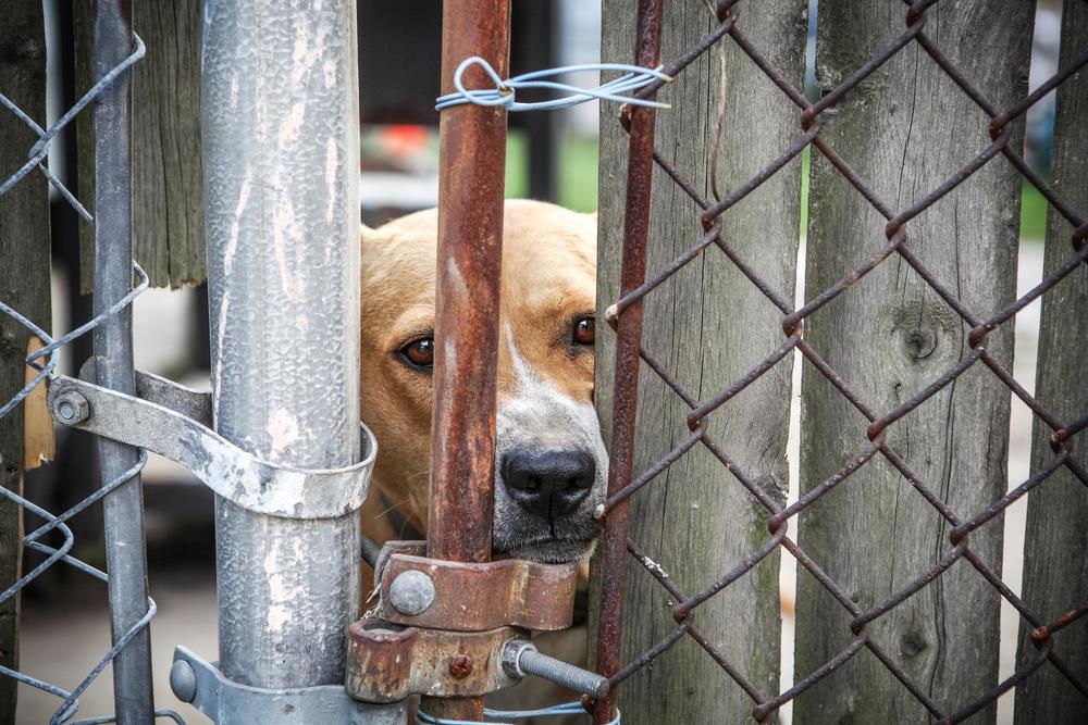 Tierschutz Freiwilligenarbeit im Ausland