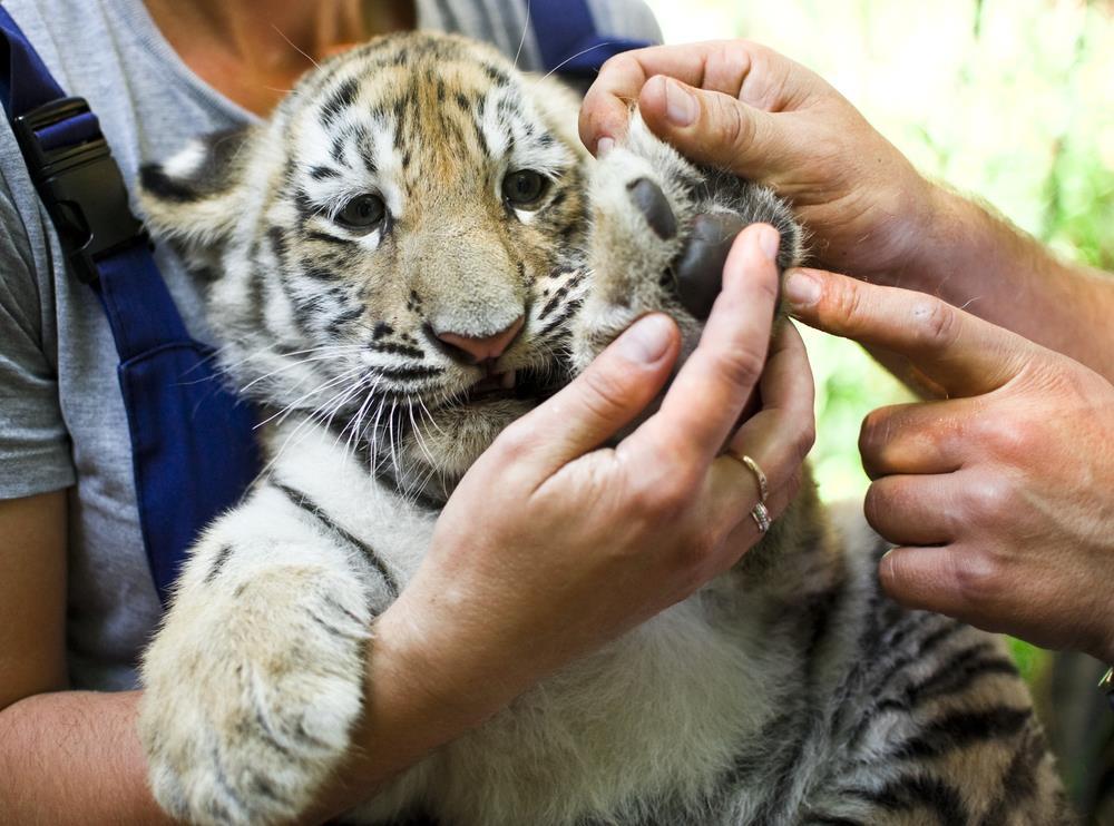 Freiwilligenarbeit: Tierpflege im Ausland